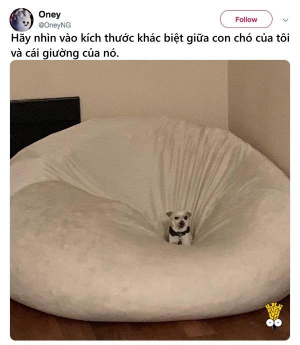 humor animals dogs cats tweets16
