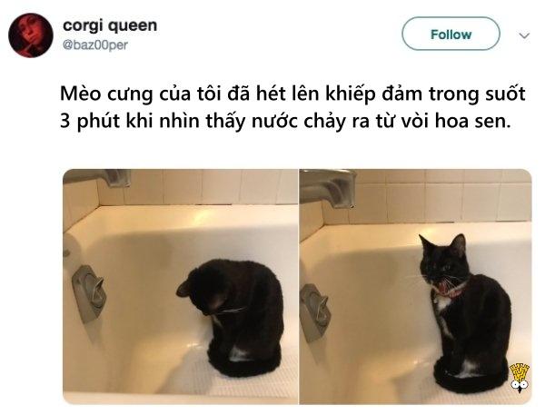 humor animals dogs cats tweets18
