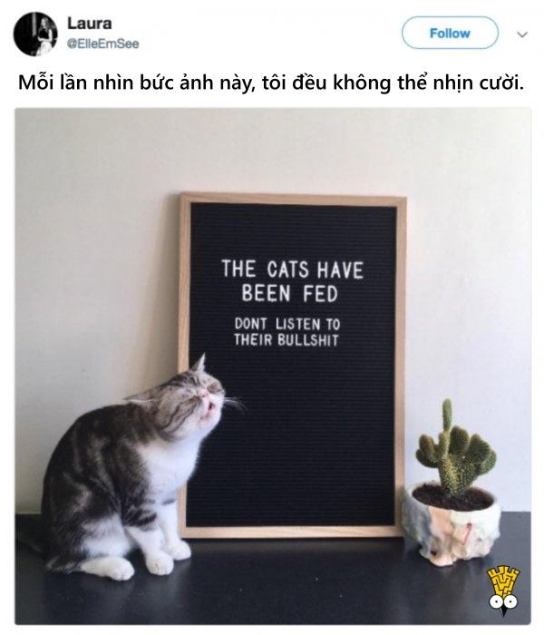 humor animals dogs cats tweets19
