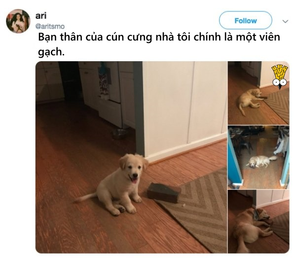 humor animals dogs cats tweets2