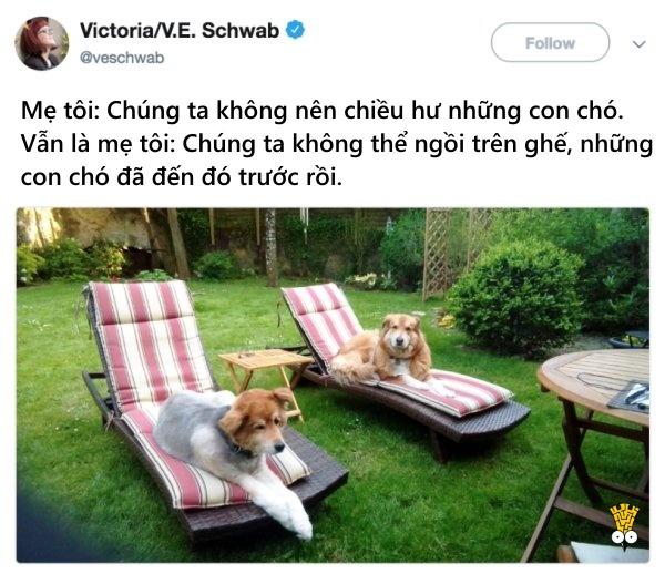 humor animals dogs cats tweets20