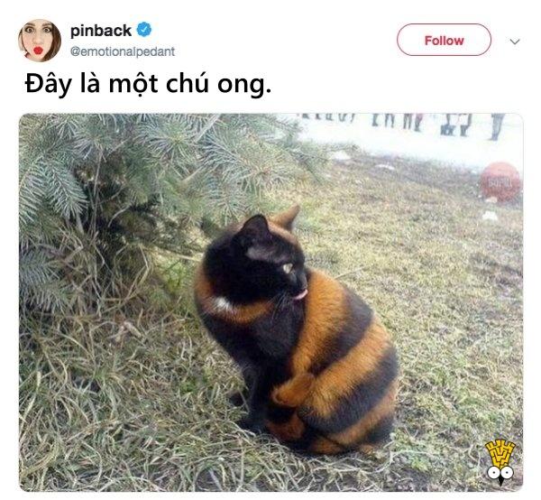 humor animals dogs cats tweets21