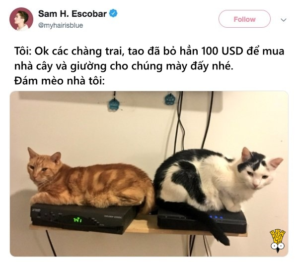humor animals dogs cats tweets22
