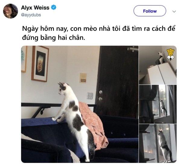 humor animals dogs cats tweets23