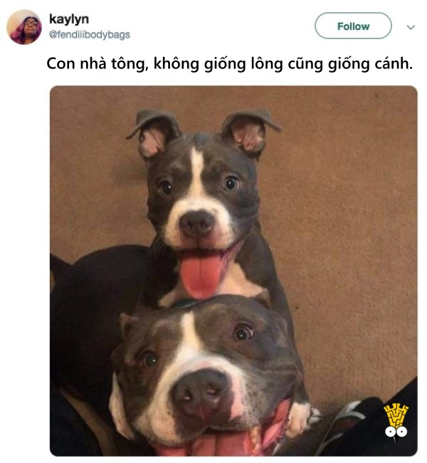 humor animals dogs cats tweets26
