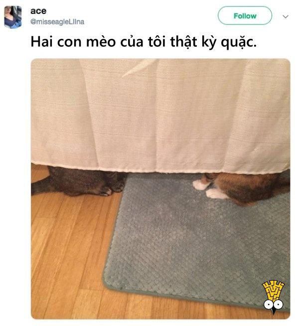 humor animals dogs cats tweets3