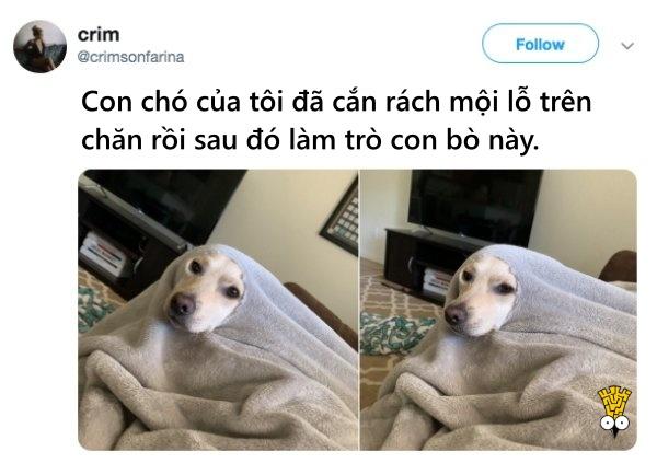 humor animals dogs cats tweets4