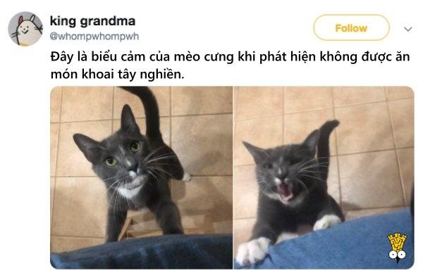 humor animals dogs cats tweets9