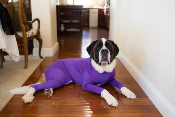 dog onesies anti shedding amazon 2 5d0b2bbbd9528 700