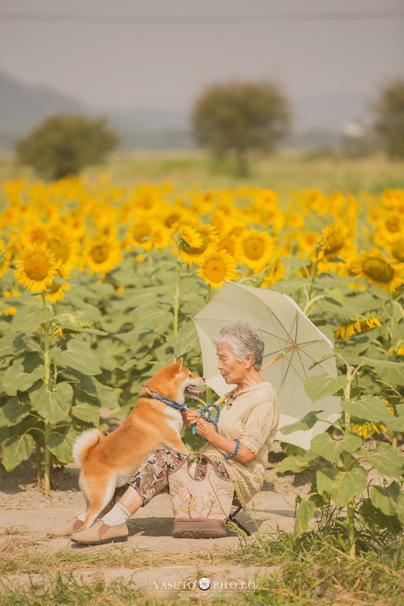 Với màu sắc ấm áp đặc trưng của mùa hè Nhật Bản, bộ ảnh đã gợi cho người xem những ký ức êm đềm về tuổi thơ cùng bà ngắm hoa hướng dương nở rộ.