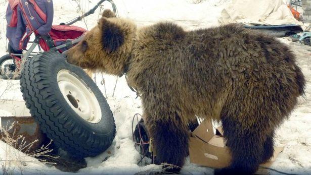 0 pay the bear 2 east2west
