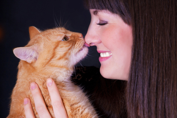 an orange tabby cat licking a human on the nose