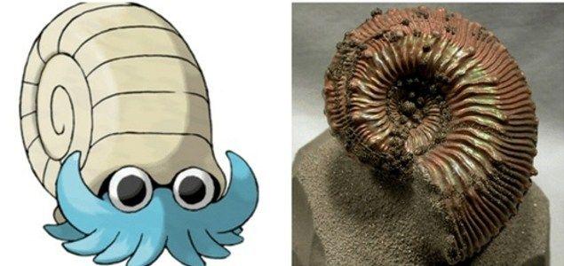 ammonitee