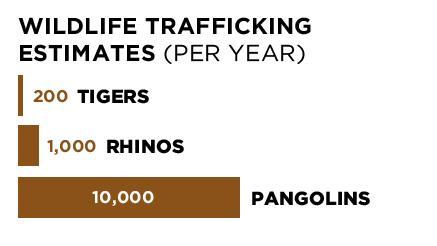 wildlifetrafficking