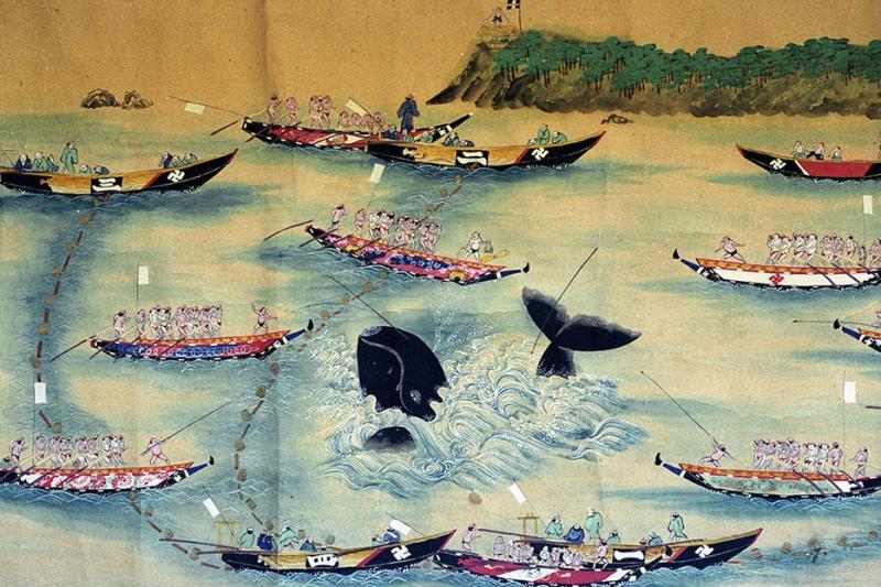 whaling japan 2