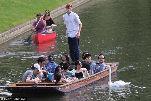 Chiêm ngưỡng gia đình 3 đời thiên nga 'cục súc', bảo kê cả nhánh sông Cambridge