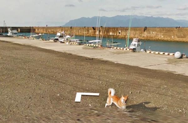 Google Street View 'khóc' trong bất lực vì mọi khung ảnh đều bị em chó này chiếm chỗ