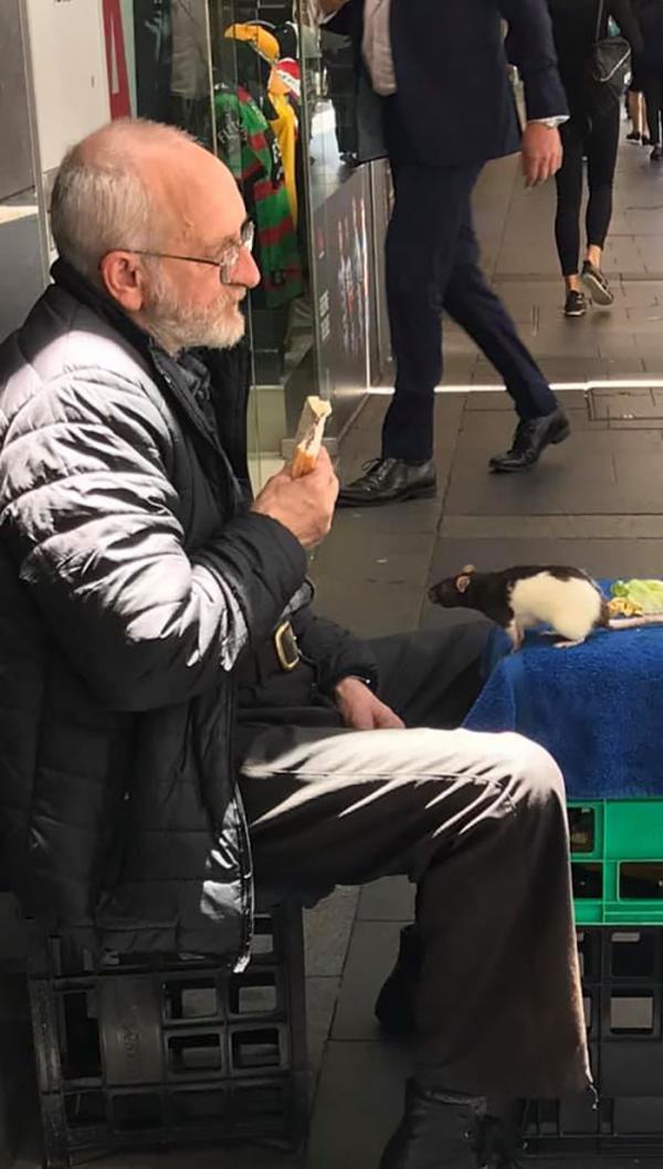 Ông cụ vô gia cư đau khổ cầu xin mọi người giúp tìm lại chuột cưng của mình
