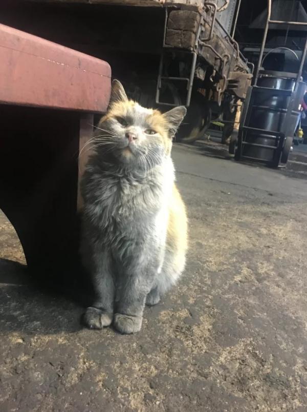 Từ mèo hoang ở dơ trở thành 'quàng thượng' rồi kiêm luôn 'gương mặt đại diện' của đường sắt Nevada