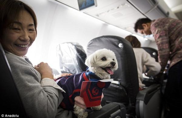 dog japan airline