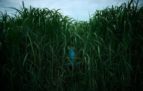 inthetallgrass1 828x529