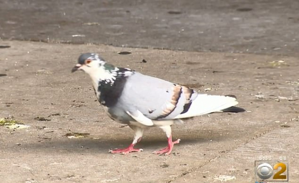 lost bird nha lap phap bi chim i len dau 3