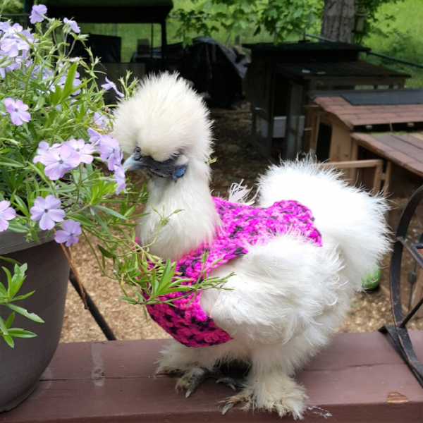 chicken fashion sweaters11