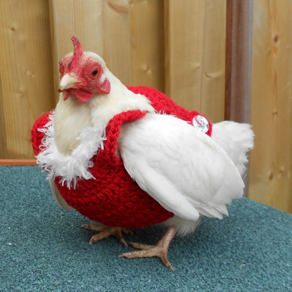 chicken fashion sweaters13