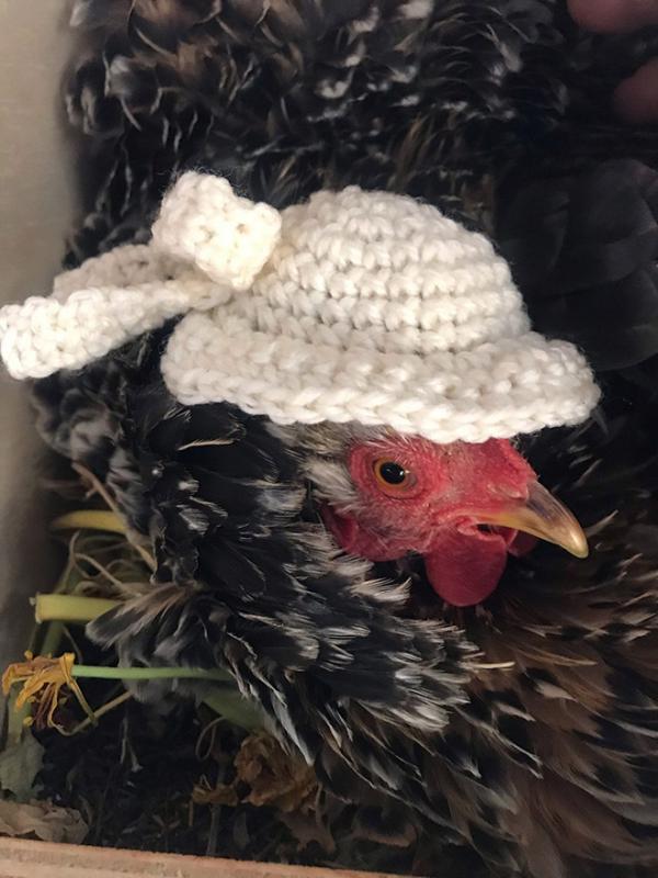 chicken fashion sweaters19a