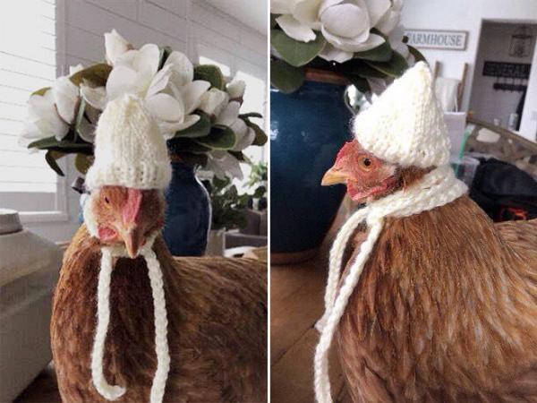 chicken fashion sweaters20