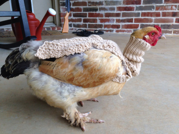 chicken fashion sweaters4
