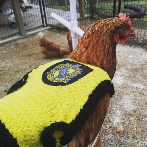 chicken fashion sweaters6