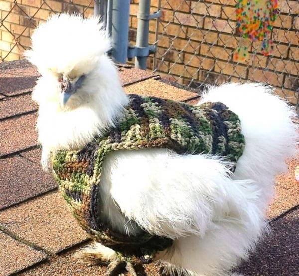 chicken fashion sweaters9
