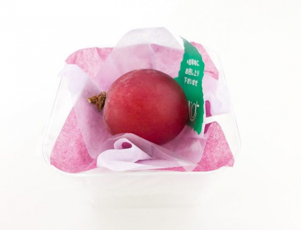 japanese grape expensive fruit present souvenir japan 11 e1568874371296