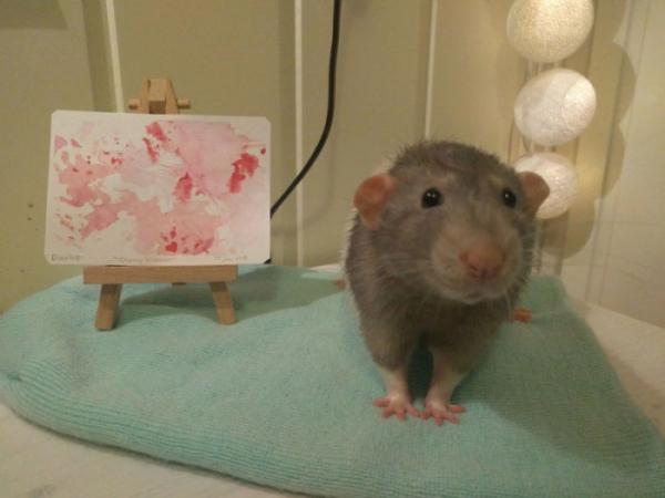trained pet rat darius paintings amalie markota andersen norway 1 10 5d89ff087fc2c 700 1
