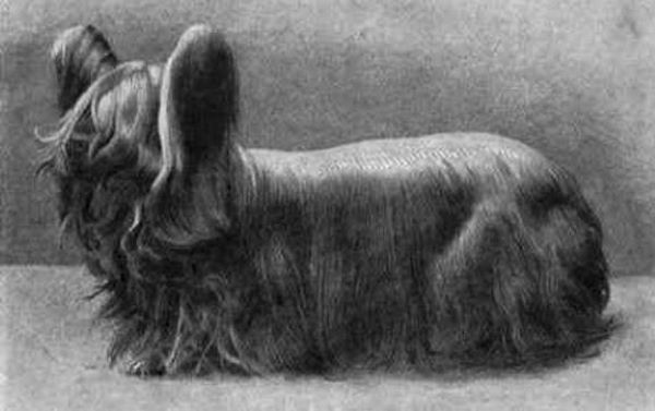 15 extinct dog breeds youve probably never heard of 78747
