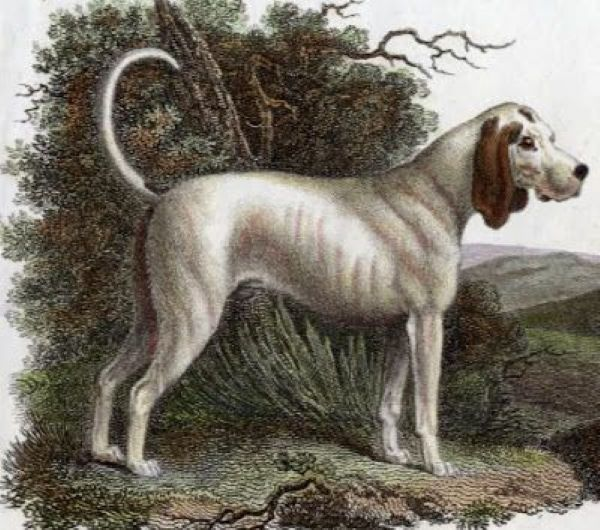 7 extinct dog breeds youve gotta see to believe 25380