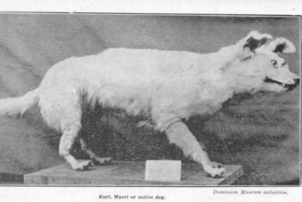 these strange extinct dog breeds are rarely talked about but deserve to be remembered 41588