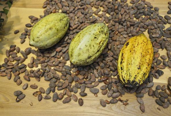 kakao termes kakao bab 0