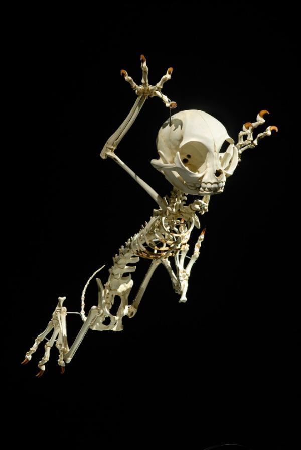 cartoon skeletons11