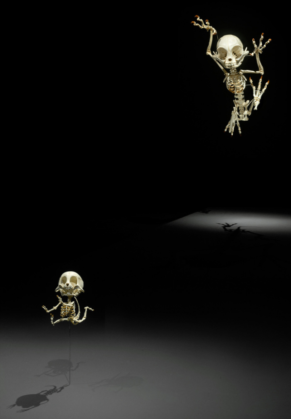 cartoon skeletons9