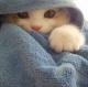 cat in towel 01
