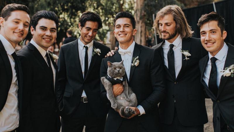 cat best man 4
